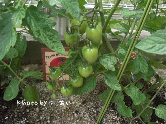 ① 家庭菜園 2011.06.06