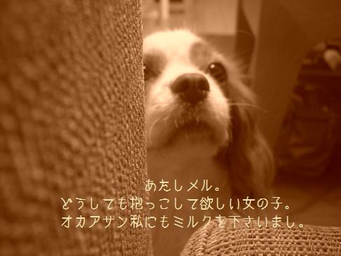 ワガママ_03