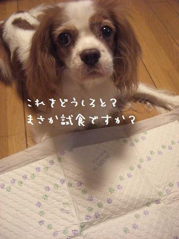 kuisinbo_03