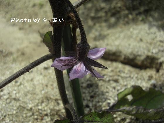 ③ 家庭菜園 2011.06.06