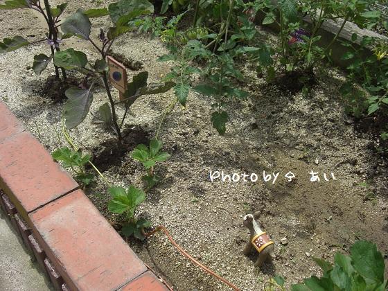 ④ 家庭菜園 2011.06.06