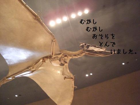 恐竜-12