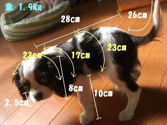 赤ちゃんの計測