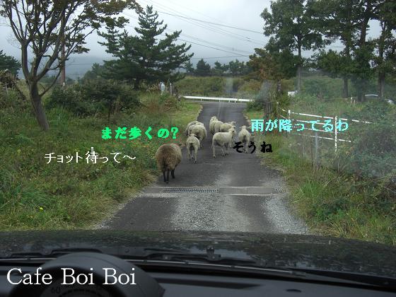 羊さんの行列