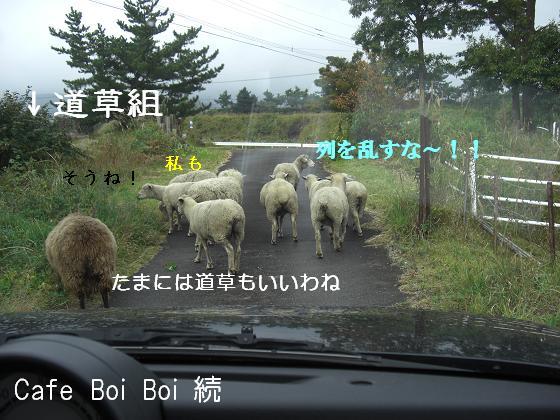 羊さんの道草