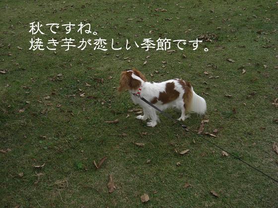 い~し~や~き芋焼き芋~