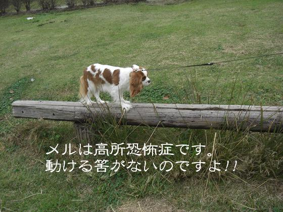アスレチック犬