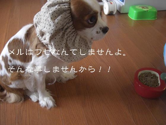 フセなんてしません!!