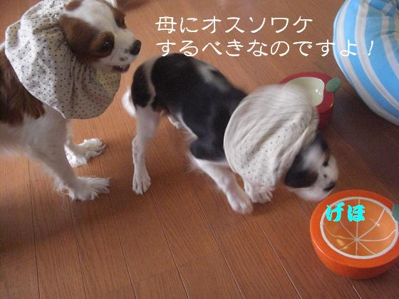 母へのオスソワケ!?