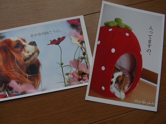 リズちゃんポストカード