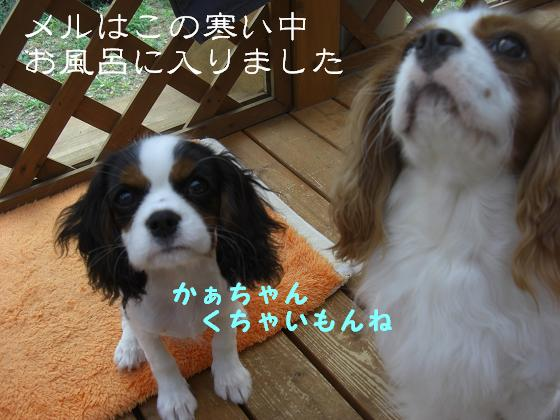 blog_import_501b5179f0a14.jpg