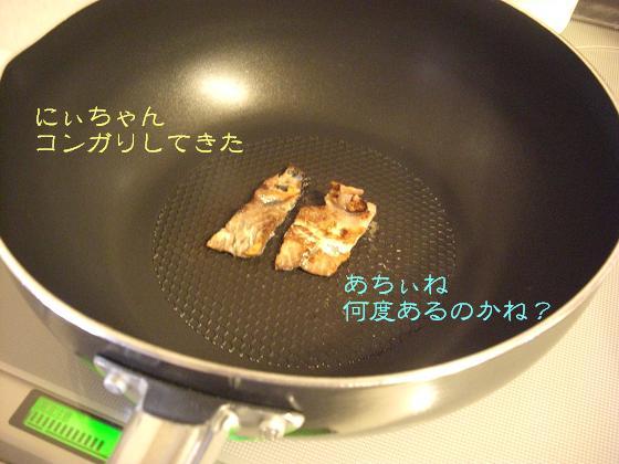 メルうし日和 ~豆キャバリア・メルと潮の日記~-鮭、つぶやきまふ。