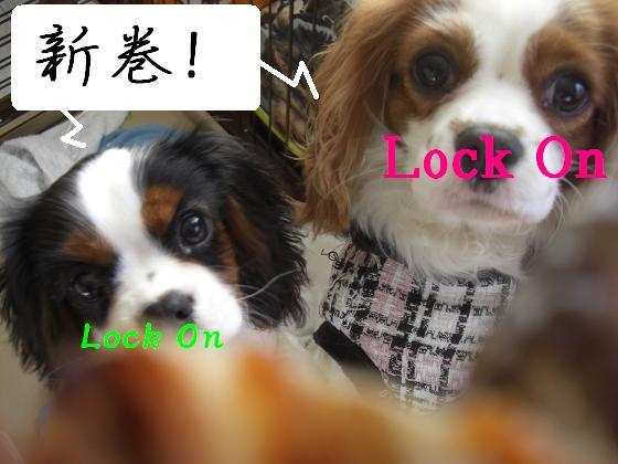 メルうし日和 ~豆キャバリア・メルと潮の日記~-ロックオン。