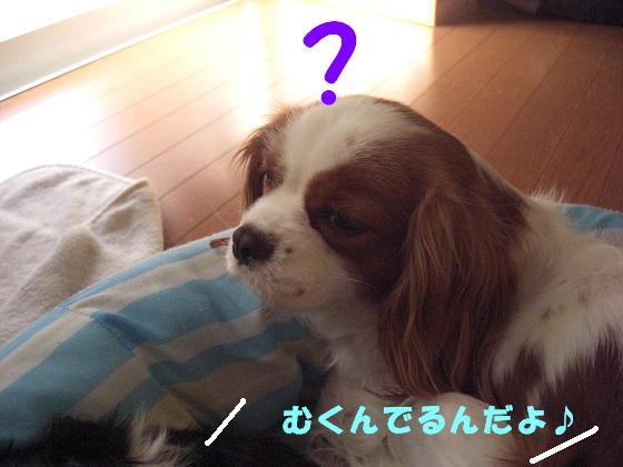 メルうし日和。++キャバリアな日記++-寝起きがね・・・