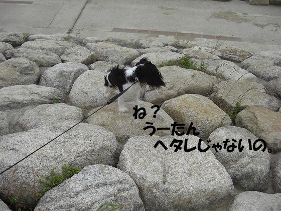 メルうし日和。++キャバリアな日記++-ヘタレじゃないでしょ?
