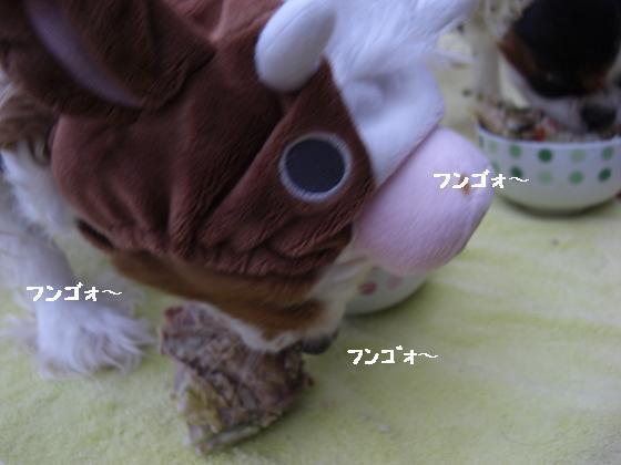 メルうし日和。++キャバリアな日記++-硬い鶏がら。