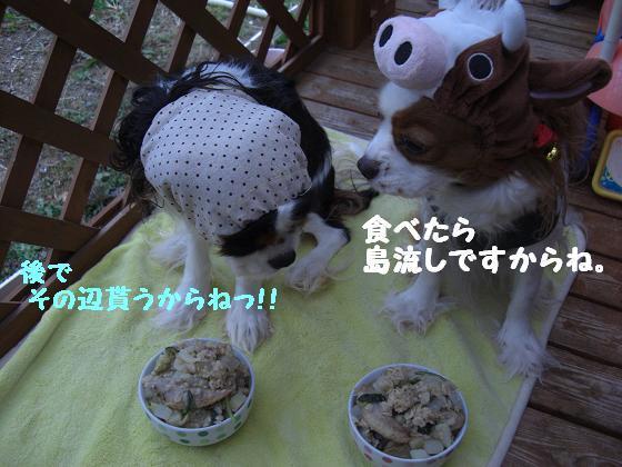 メルうし日和。++キャバリアな日記++-島那菓子。