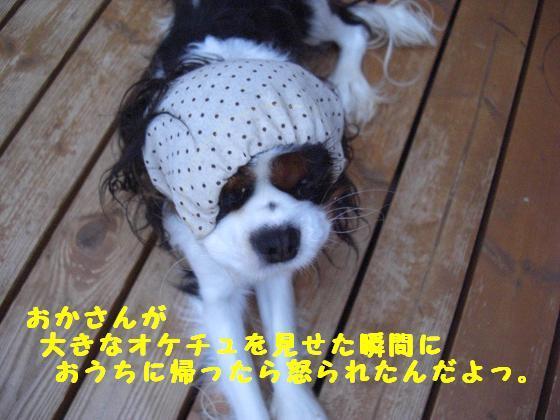 メルうし日和。++キャバリアな日記++-怒られたんだ。