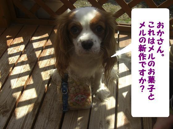 メルうし日和。++キャバリアな日記++-メルの新作。