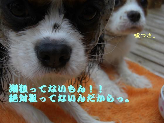 メルうし日和。++キャバリアな日記++-うーたんのっ!!