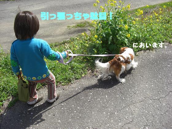 メルうし日和。++キャバリアな日記++-Pueちゃん初散歩。
