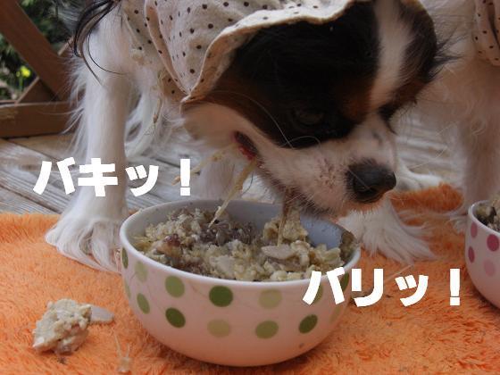 メルうし日和。++キャバリアな日記++-オオカミ。