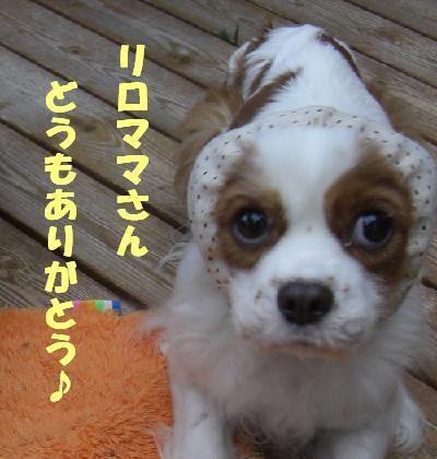 メルうし日和。++キャバリアな日記++-メルからのお礼。