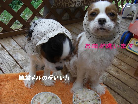 メルうし日和。++キャバリアな日記++-お皿が違います!!