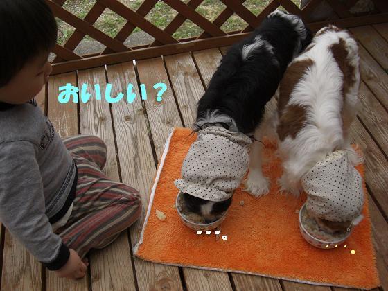 メルうし日和。++キャバリアな日記++-美味しい?