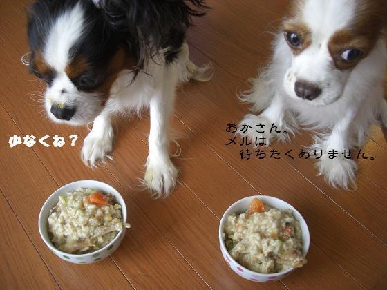 メルうし日和。-豆腐②