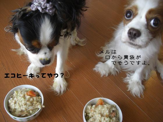 メルうし日和。-豆腐③