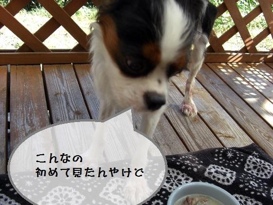 メルうし日和。-chee3