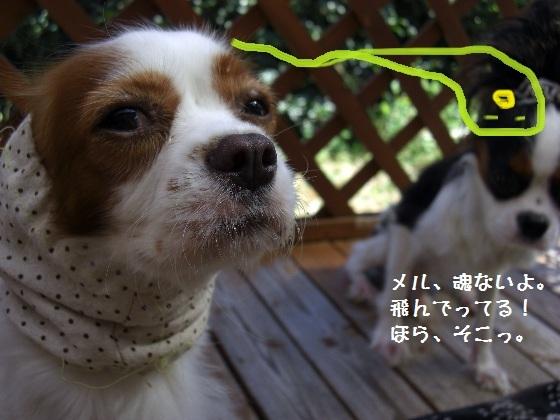 メルうし日和。-chee4