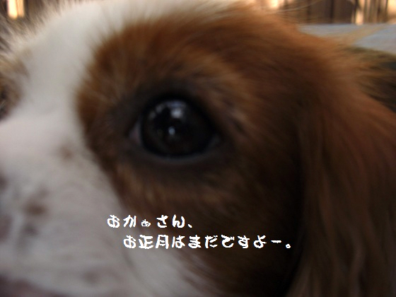 メルうし日和。-黒豆3
