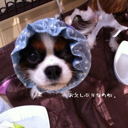 メルうし日和。-01-201110-1