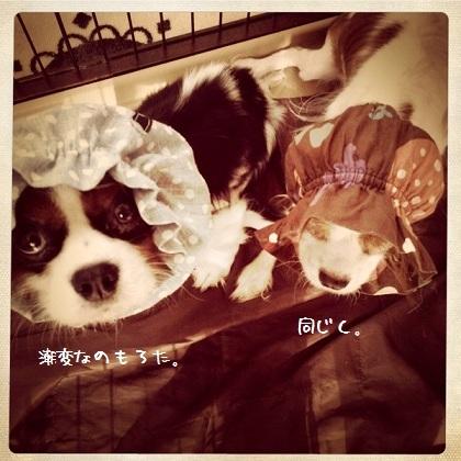 メルうし日和。-02-201110-1