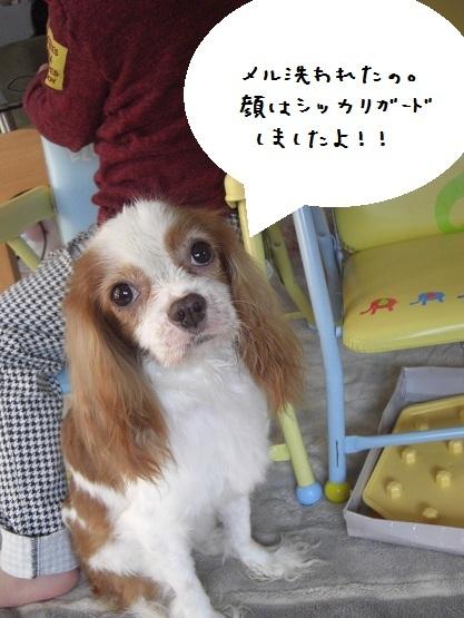 メルうし日和。-3-2011.12.03アラワレマシタ