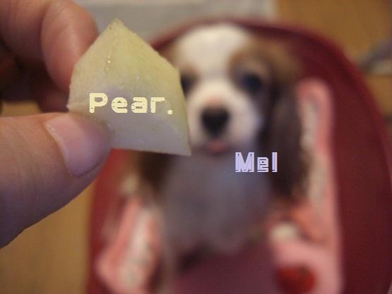 メルうし日和。-1 Pear