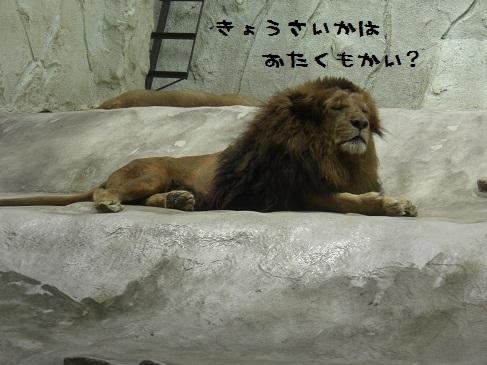 メルうし日和。-③動物園に行こうよ