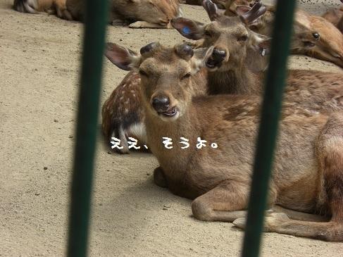 メルうし日和。-④動物園に行こうよ