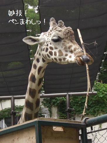 メルうし日和。-⑦動物園に行こうよ