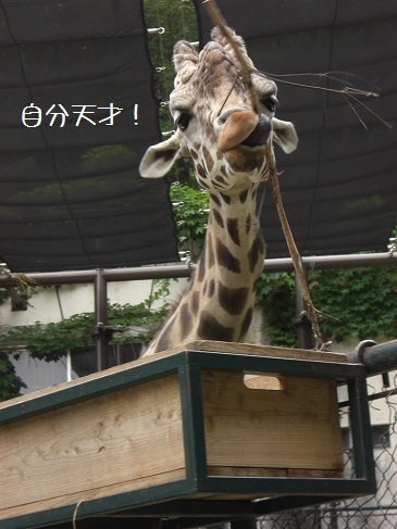 メルうし日和。-⑧動物園に行こうよ