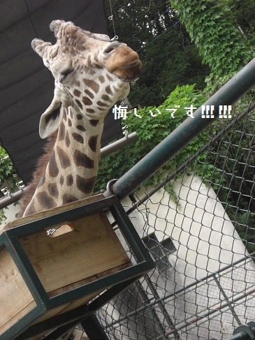 メルうし日和。-⑨動物園に行こうよ