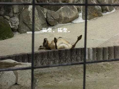 メルうし日和。-②動物園番外編