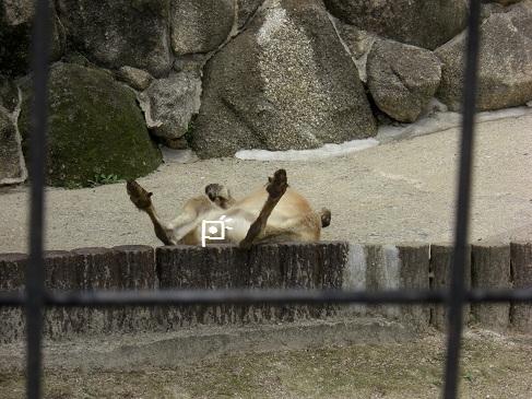 メルうし日和。-③動物園番外編
