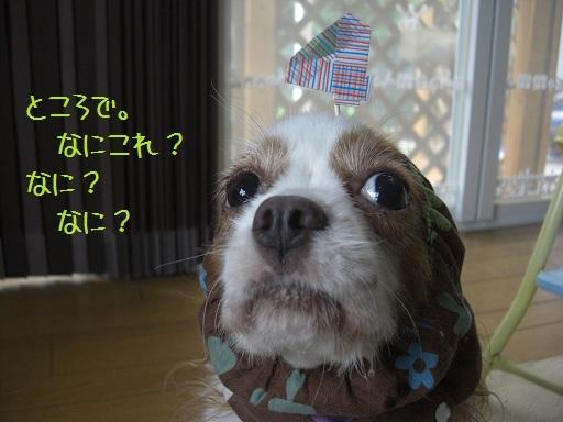 メルうし日和。-12 誕生日