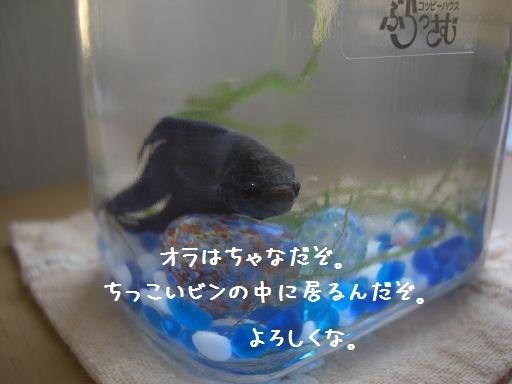 メルうし日和。-2 新しい家族