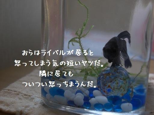 メルうし日和。-3 新しい家族