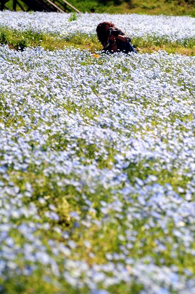 20130508hananokuni017.jpg