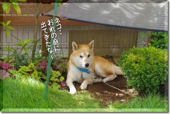 ネコ・・俺の庭に・・